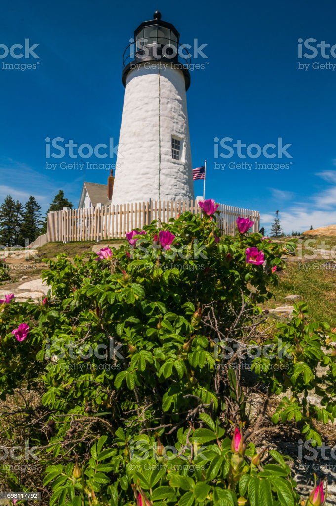 Roses at the Lighthouse Tower stock photo