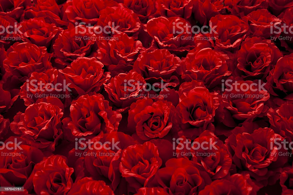 roses background royalty-free stock photo