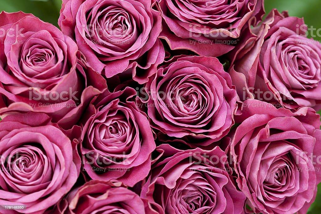 Fundo de rosas foto royalty-free