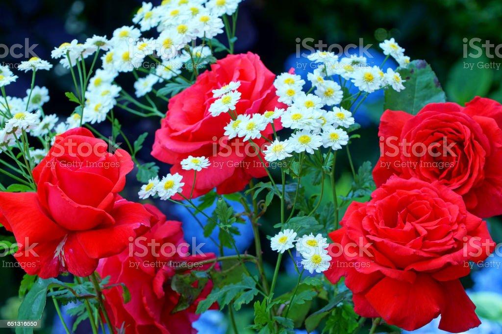 Roses, feverfew and hydrangea stock photo