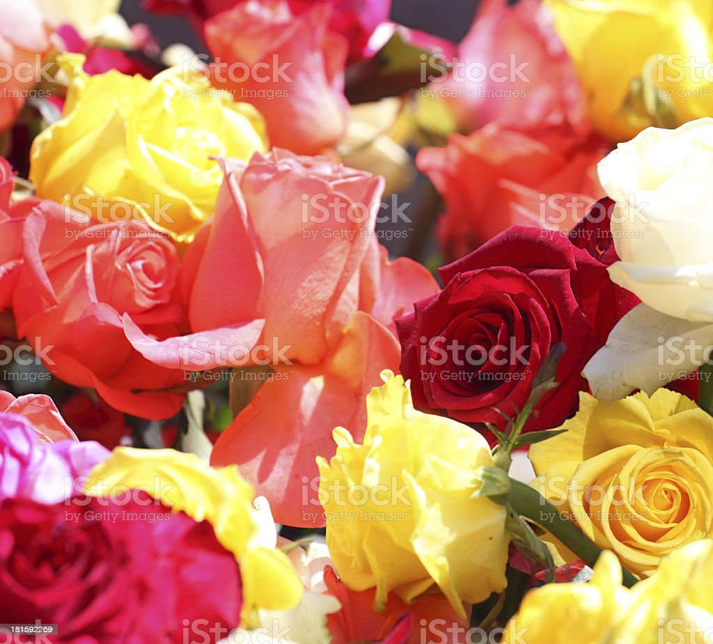 roses flowers background royalty-free stock photo