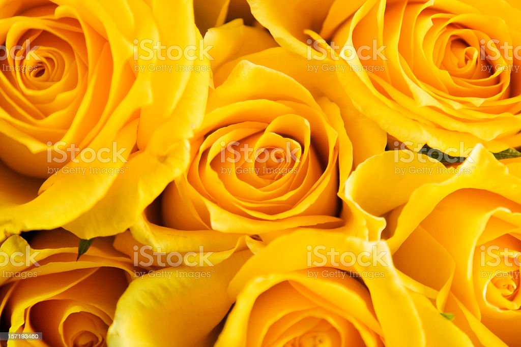 Roses for Mothers Day royalty-free stock photo