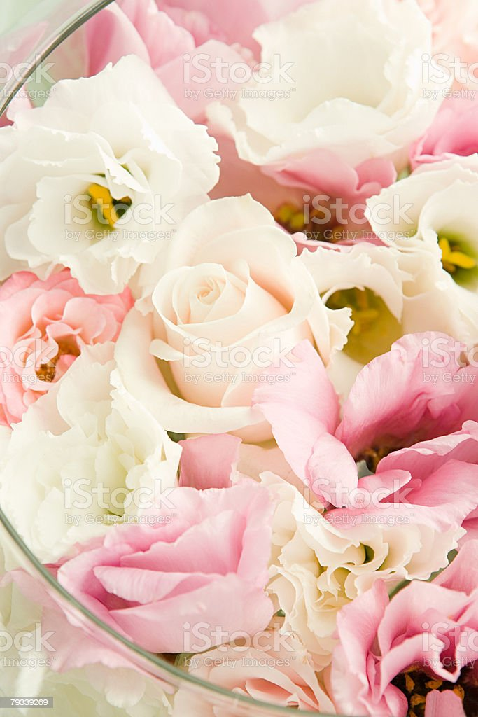 Roses in a bowl stock photo