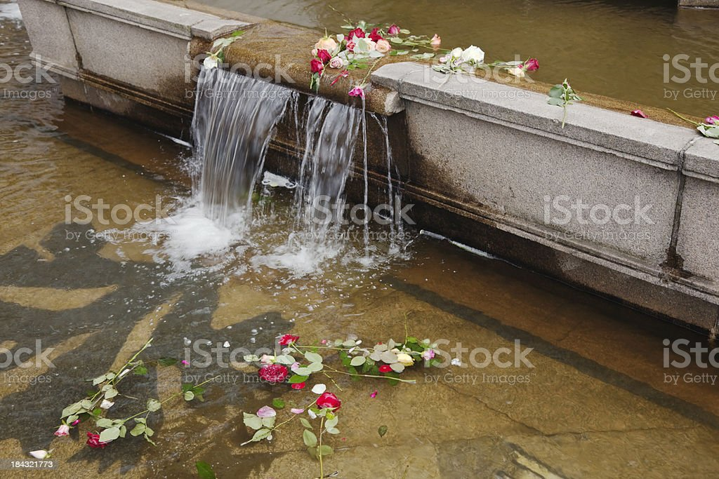 Roses in a fountain. royalty-free stock photo