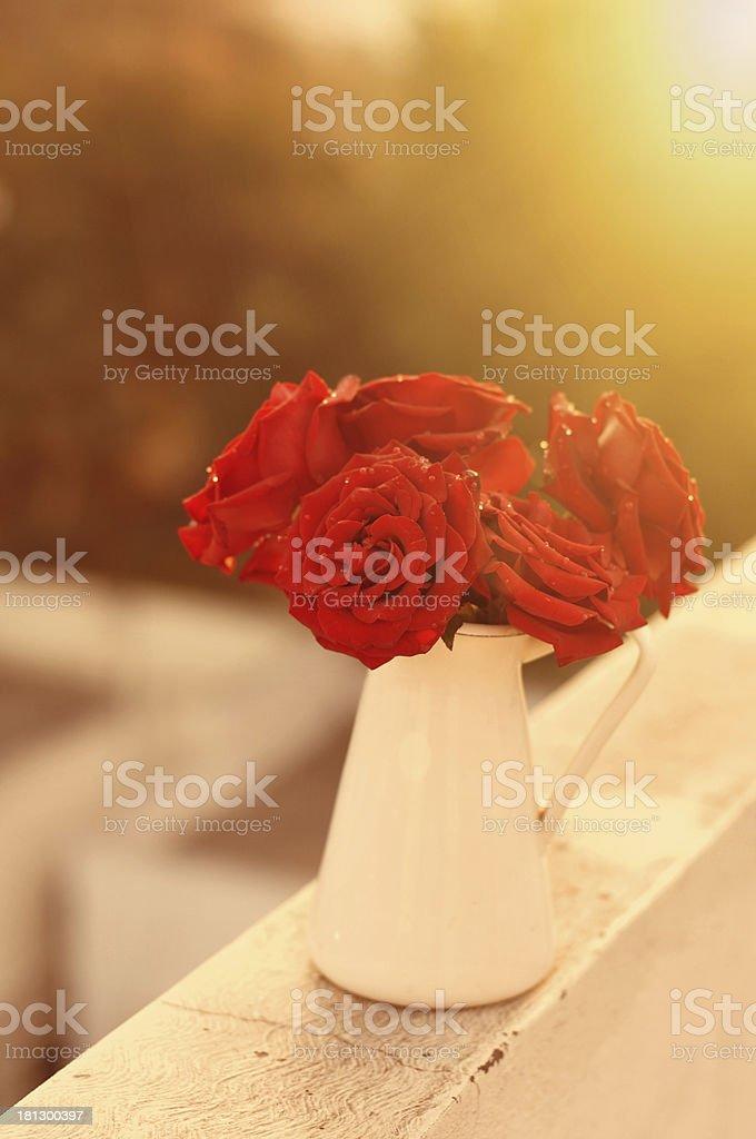 Roses in morning sun flared light stock photo