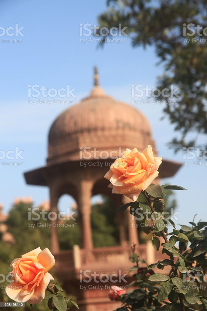 Roses in the garden around Junagarh, Fort, bikaner, rajasthan,  traditional, stock photo