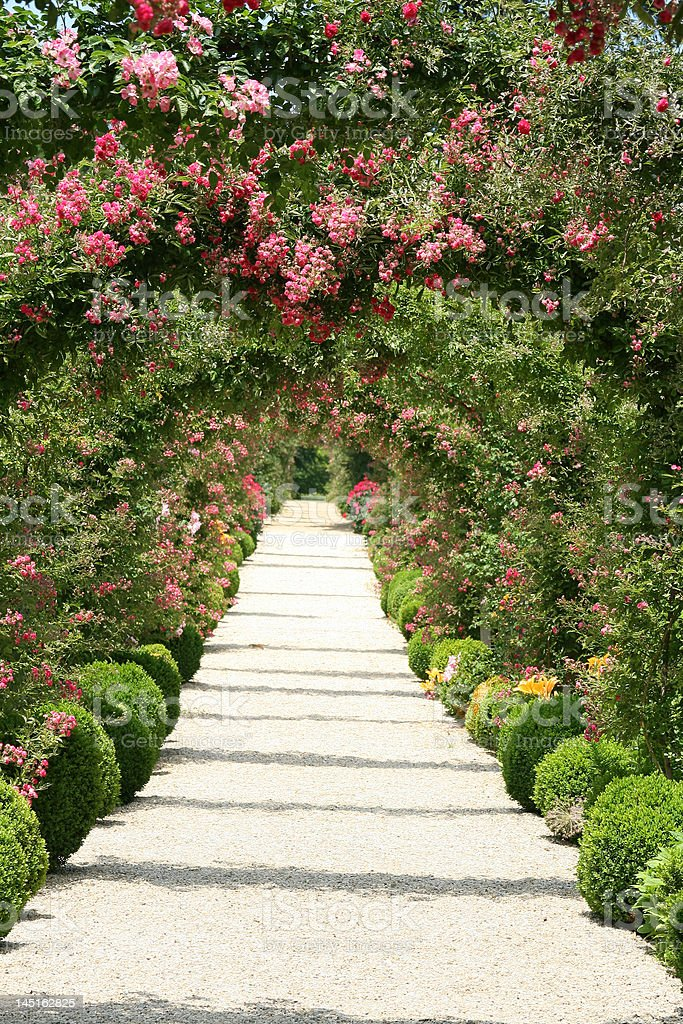 Roses in the Garden royalty-free stock photo