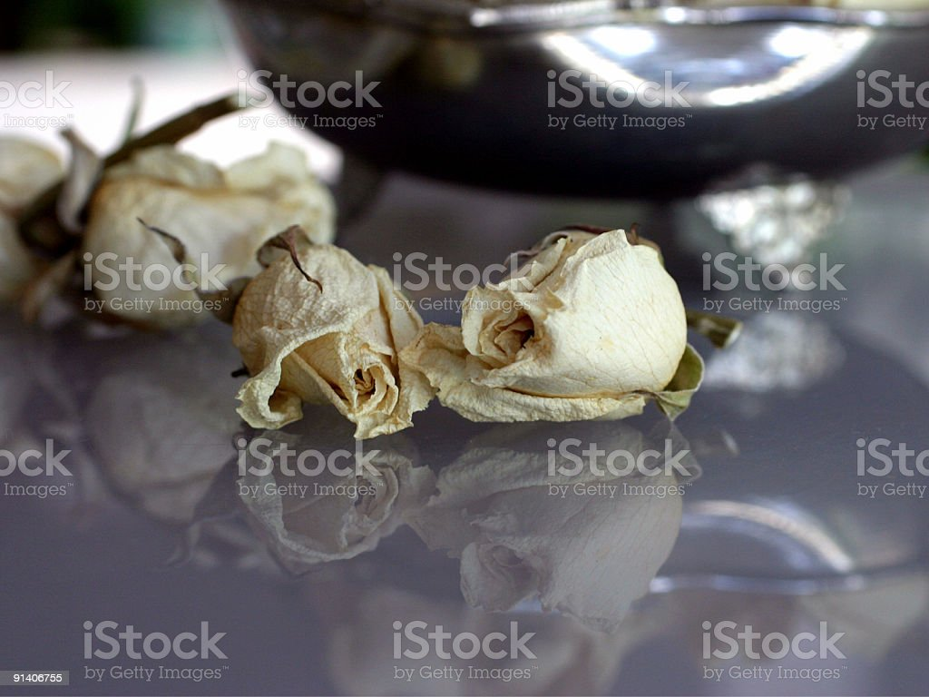 roses in the old vase ver 2.0 royalty-free stock photo