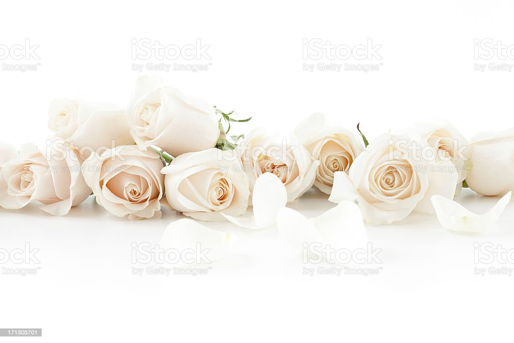 Roses on a white surface stock photo