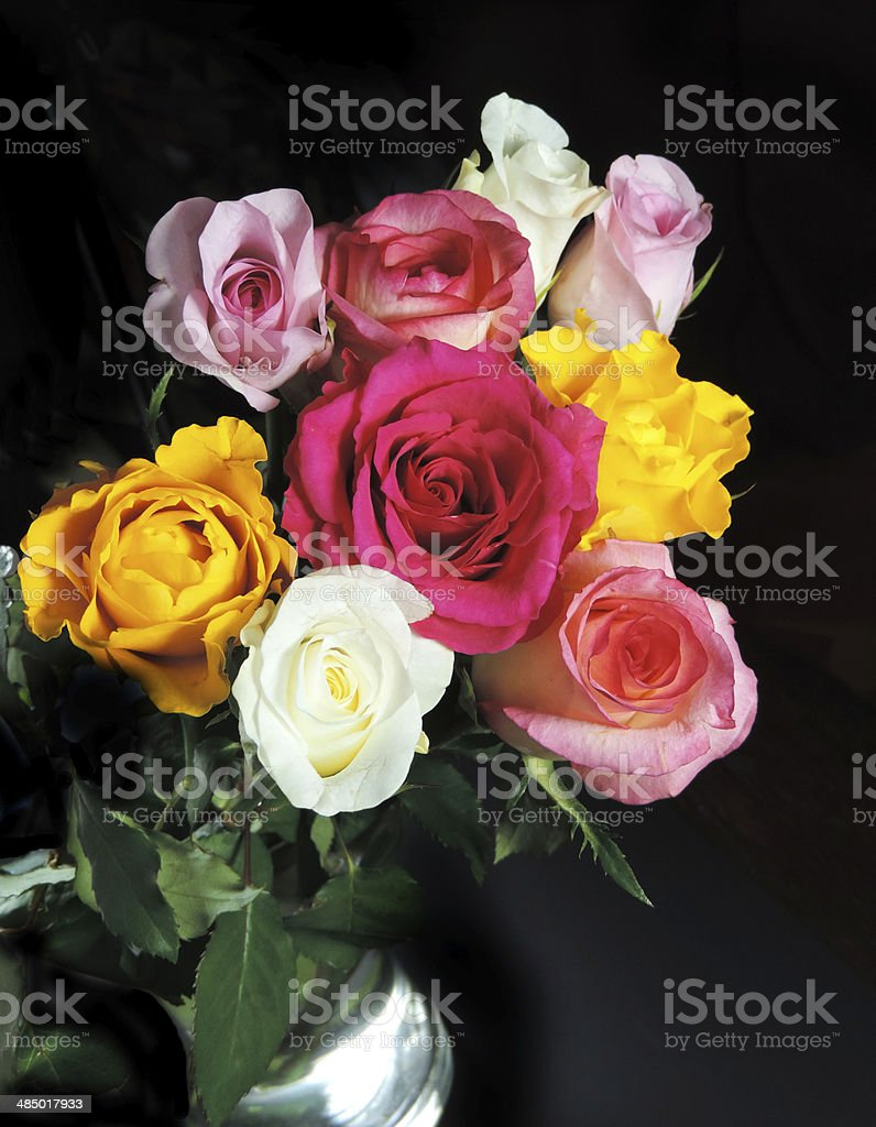 Roses on black royalty-free stock photo