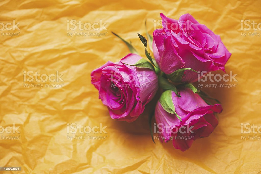 roses on silk paper royalty-free stock photo