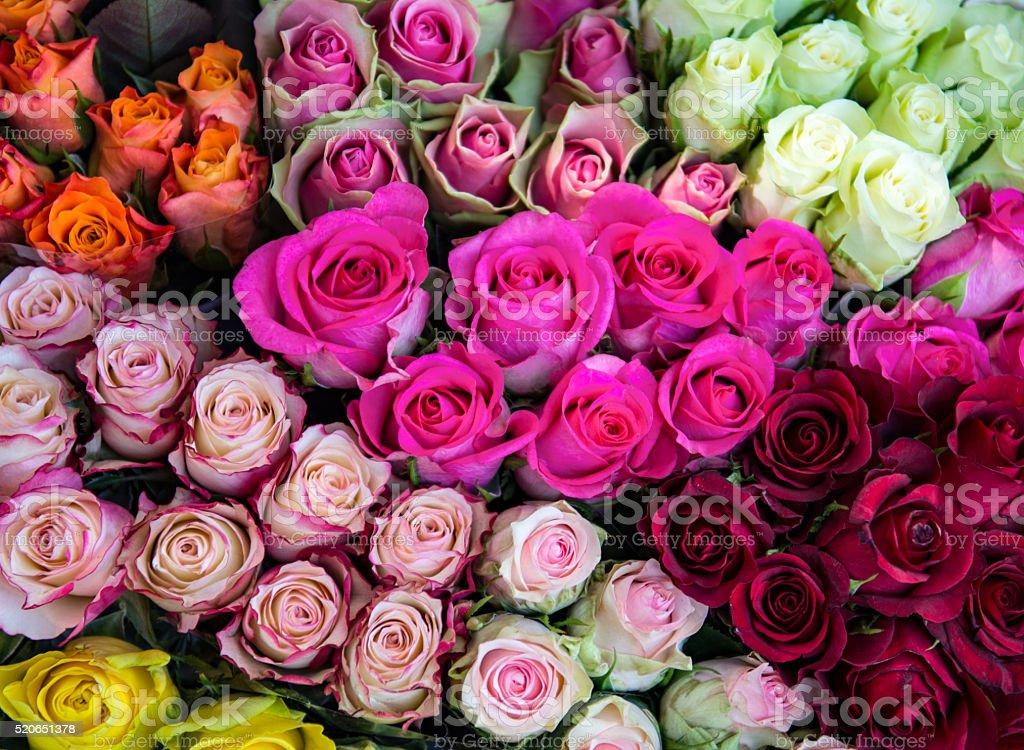 Roses on the flower market stock photo