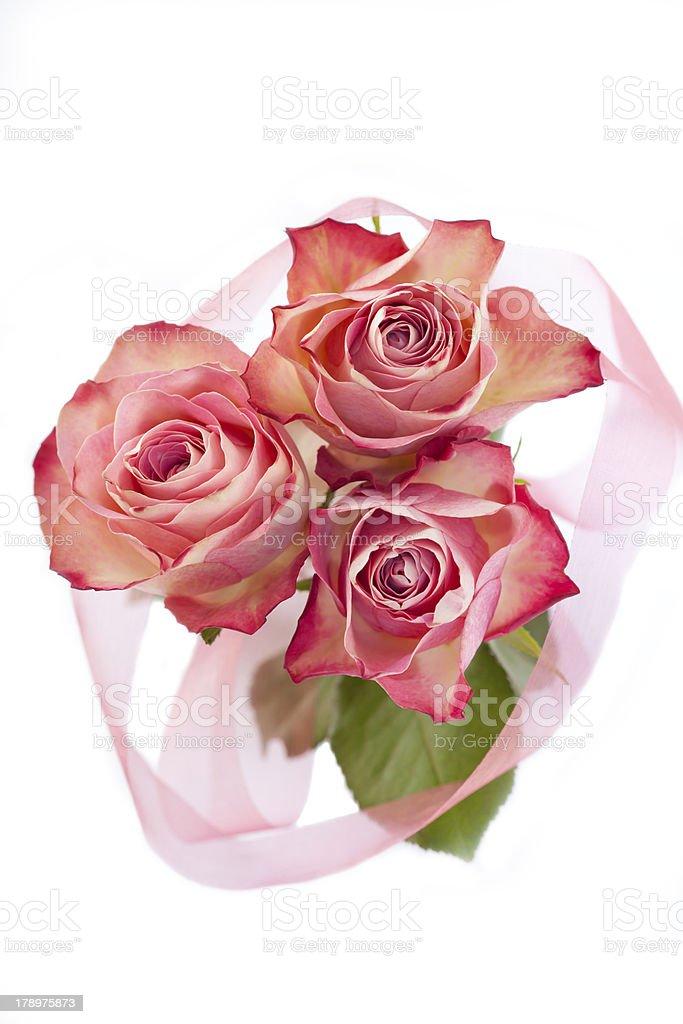 Rosas em branco foto royalty-free