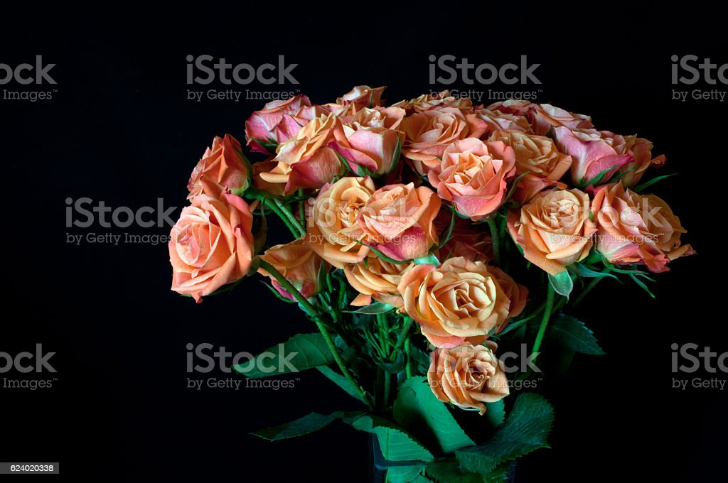 Roses stock photo