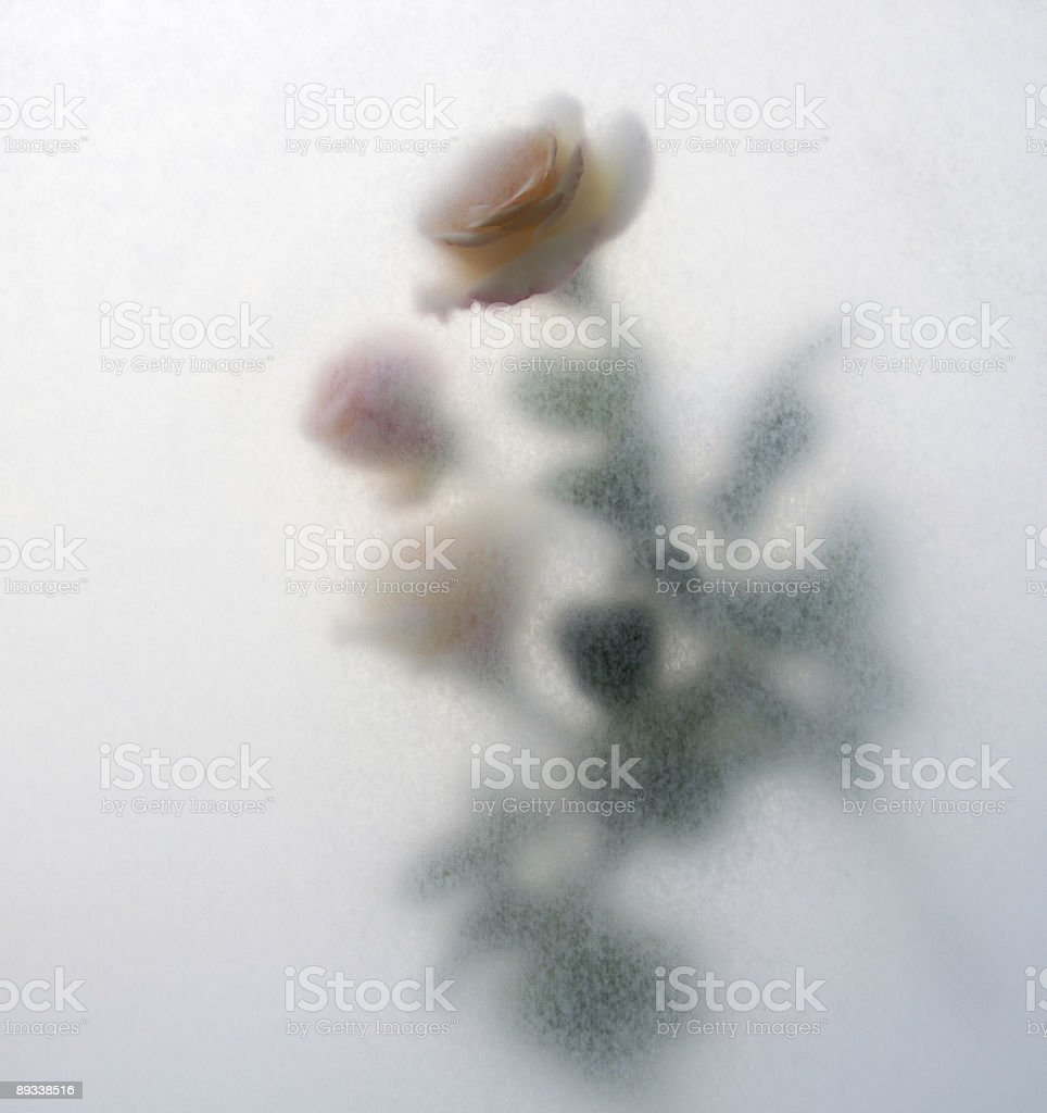 roses texture royalty-free stock photo