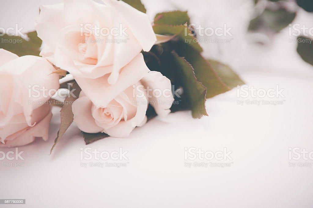 Roses Vintage Background stock photo