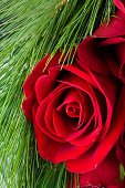 Roses with pine needles