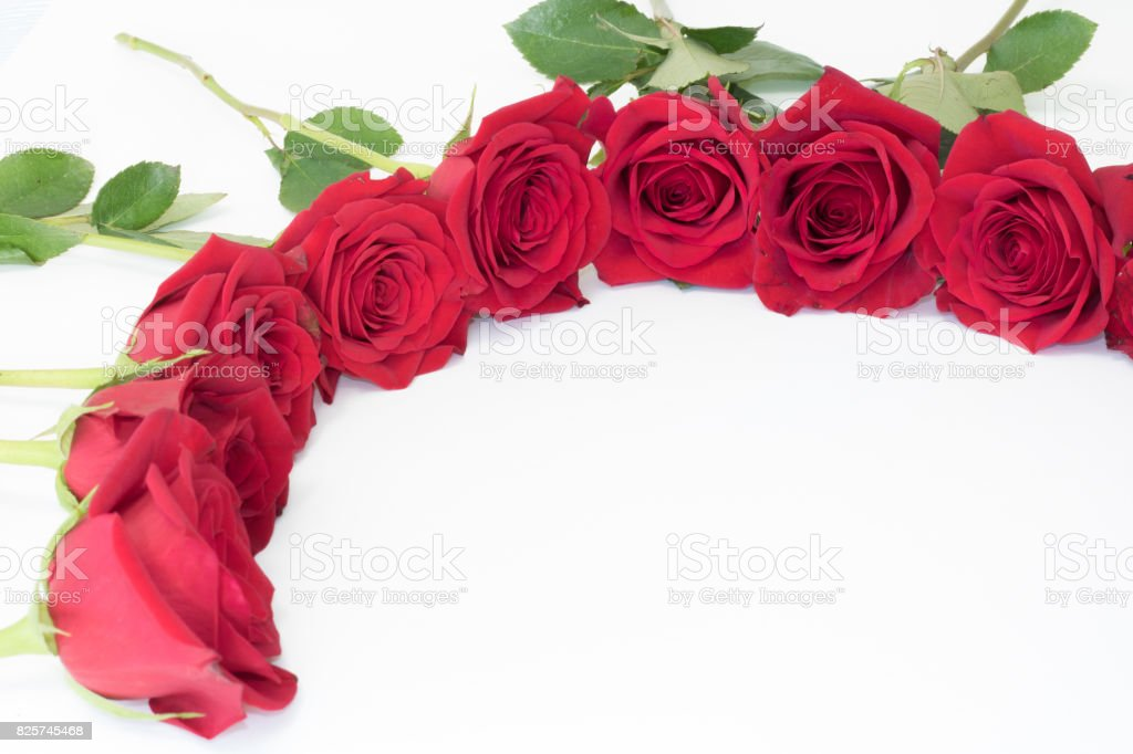 Roses with white background stock photo