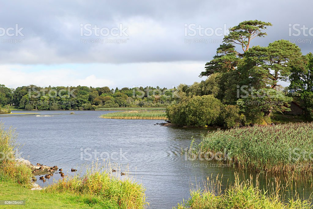 Ross Bay Lough Leane Lower Lake. stock photo
