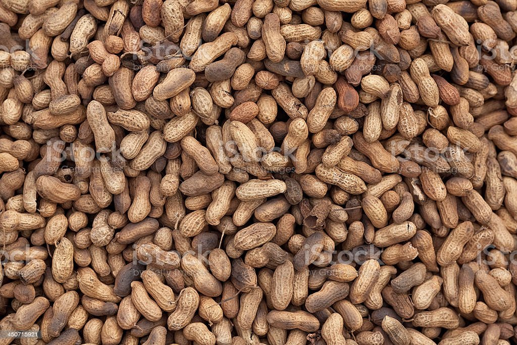 Rosted peanuts royalty-free stock photo
