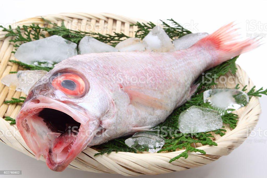 Rosy sea bass stock photo