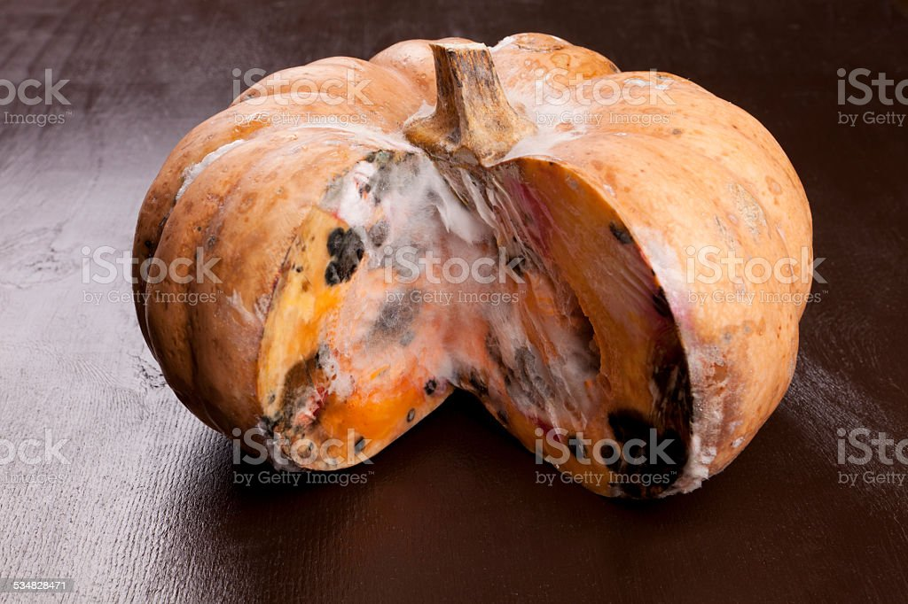 rot pumpkin stock photo