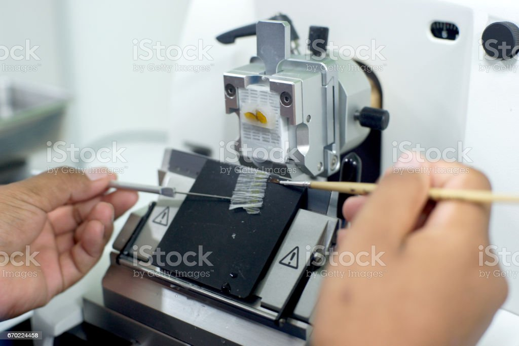 Rotary Microtome Section for diagnosis in pathology stock photo