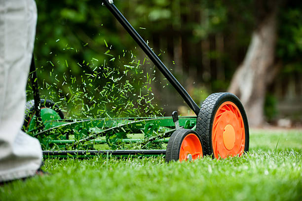 What Research About Lawns Can Teach You