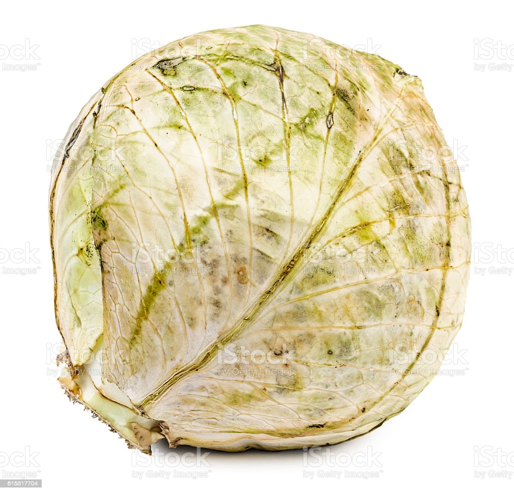Rotten and dried cabbage isolated stock photo