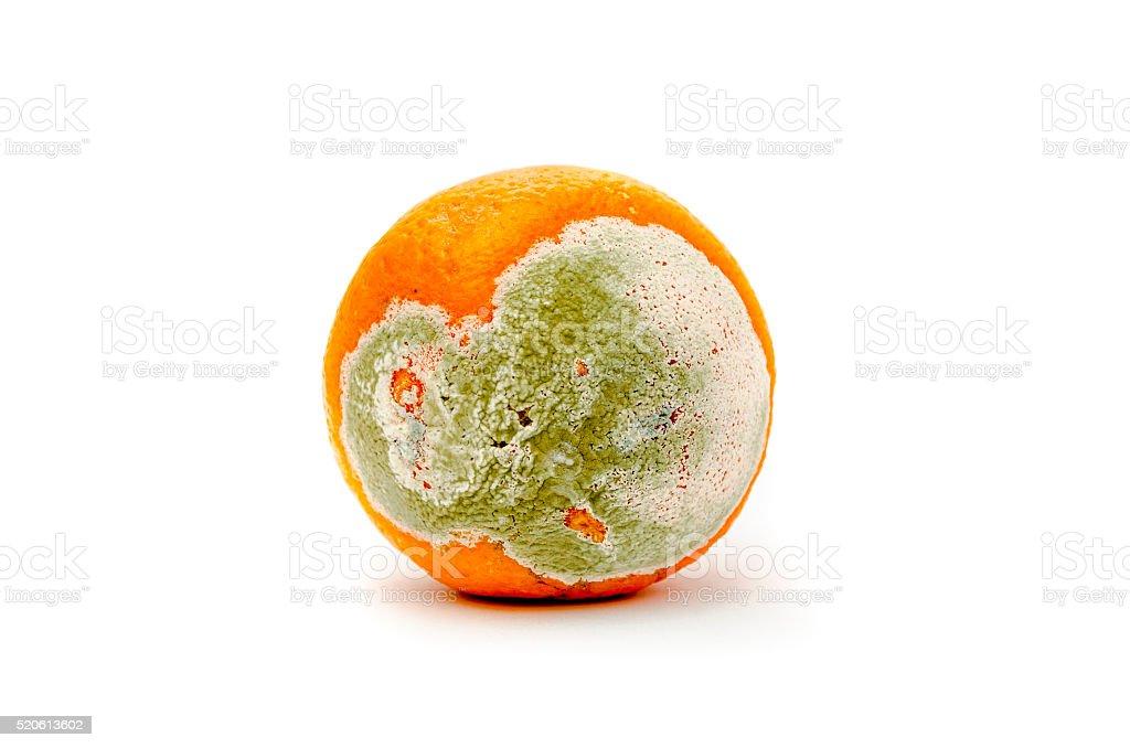 rotten and moldy orange stock photo