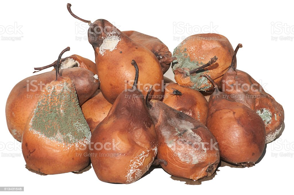 Rotten and moldy pears stock photo