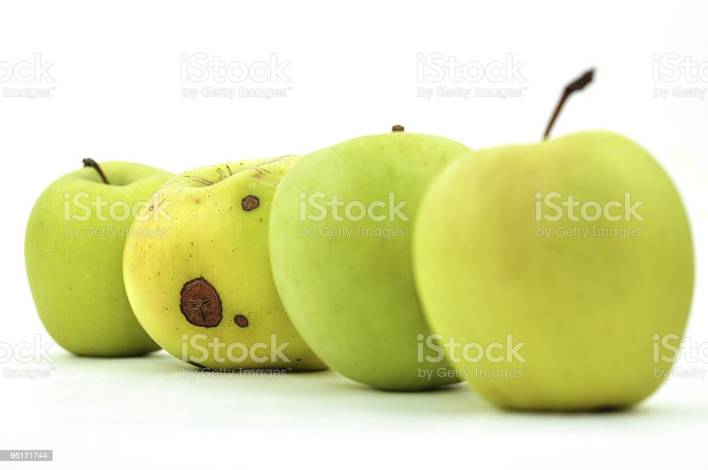 Rotten Apple between Perfect Ones stock photo