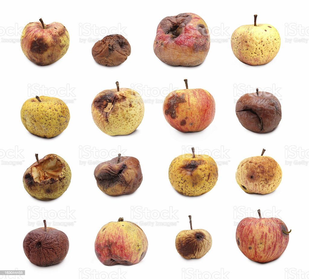Rotten Apples on White stock photo