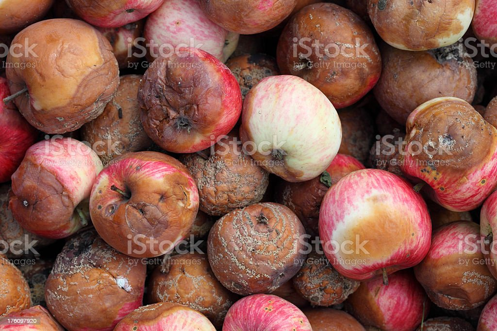 Rotten Apples royalty-free stock photo