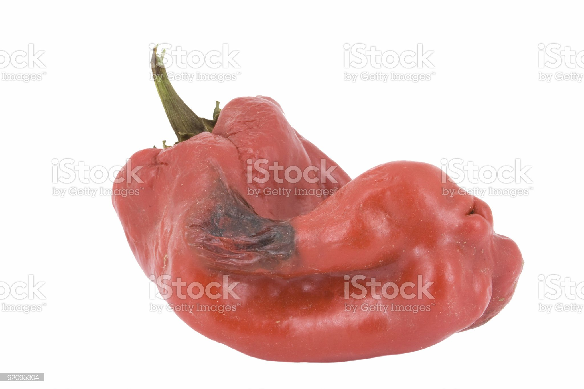 Rotten Bell Pepper royalty-free stock photo