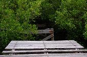 Rotten Bridge in mangrove forest with wood walkway bridge.