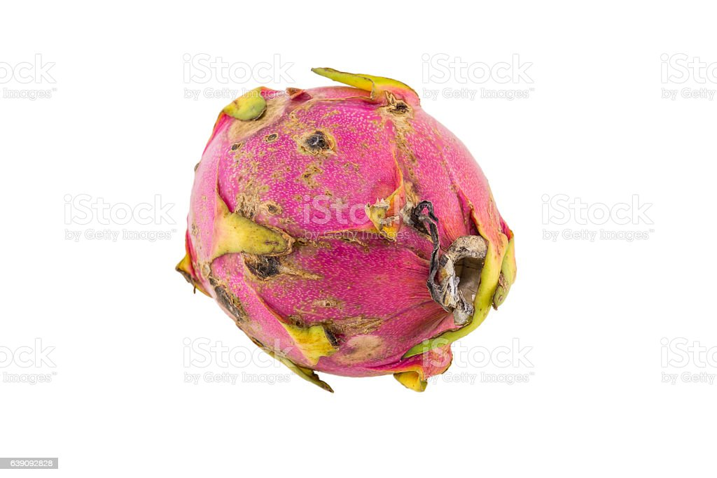 Rotten dragon fruit isolated on white background stock photo