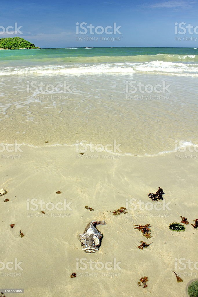 Rotten fish royalty-free stock photo