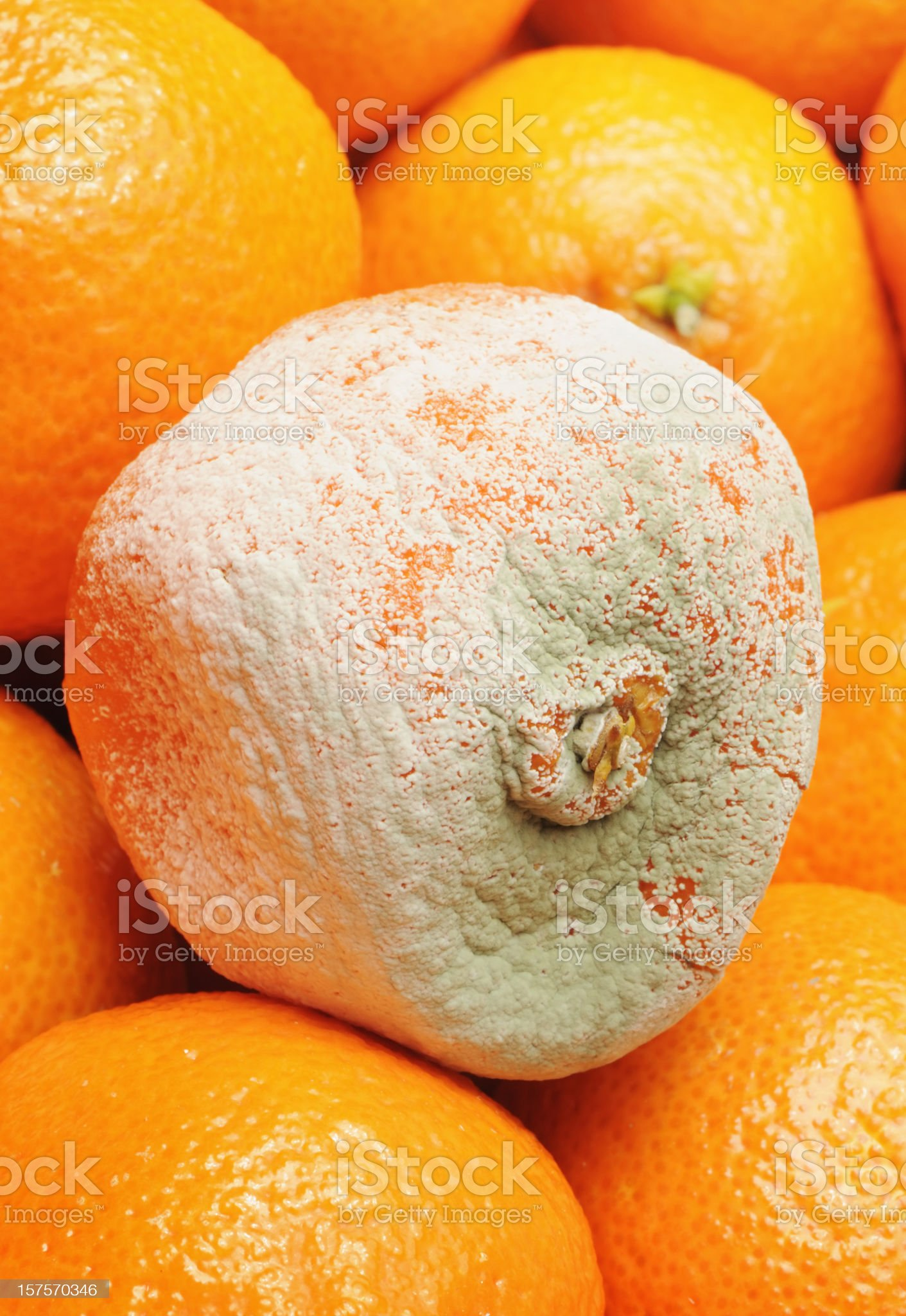 Rotten fruit royalty-free stock photo
