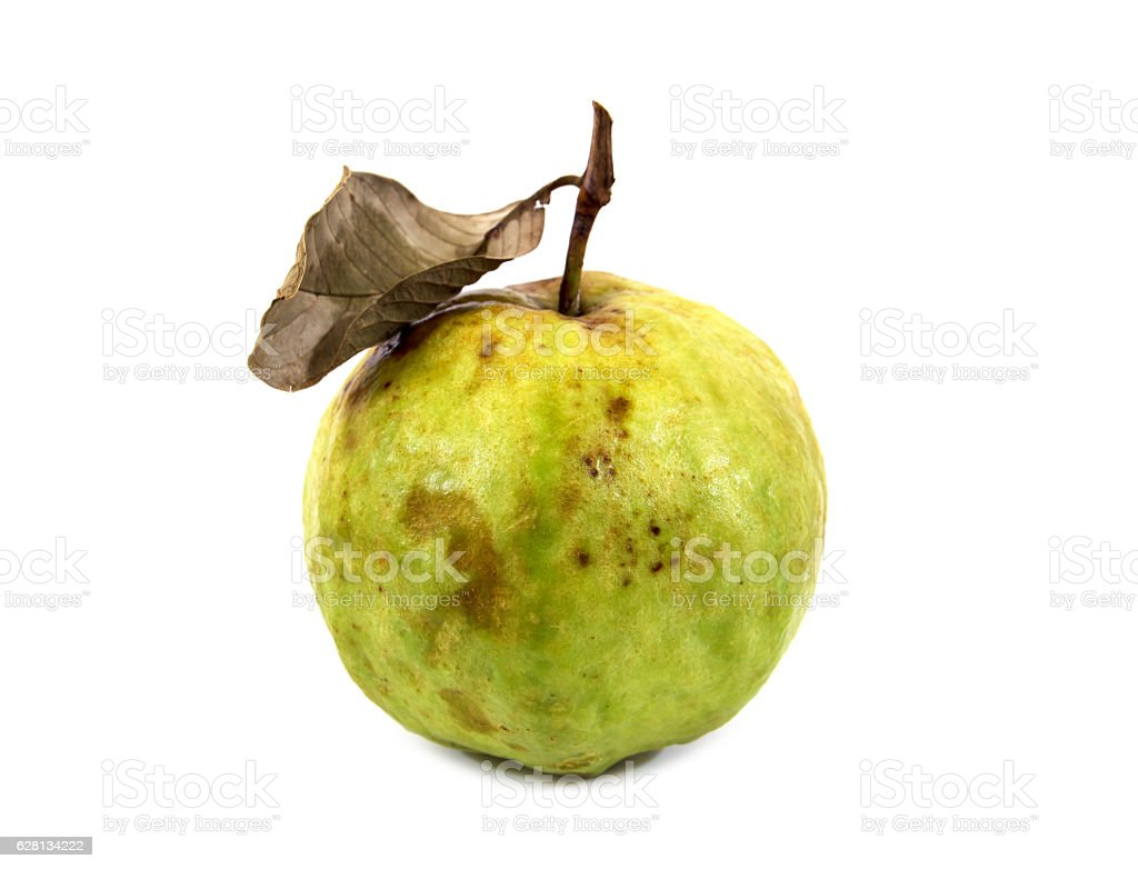 Rotten guava fruit with dry leaf isolated on white background. stock photo