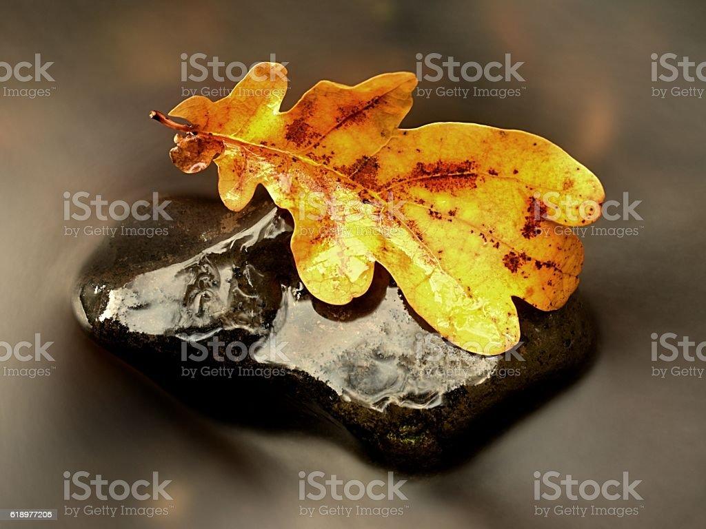 Rotten old oak leaf on basalt stone in blurred water stock photo