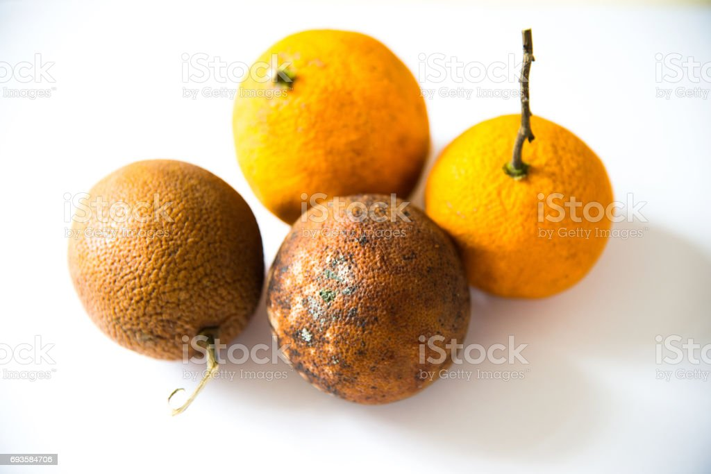 Rotten oranges isolated on white background stock photo