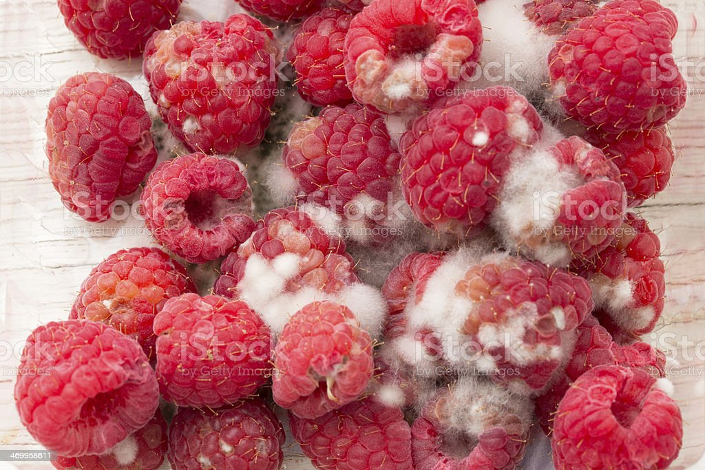 Rotten Raspberries stock photo