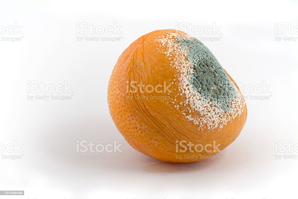 Rotten tangerine stock photo