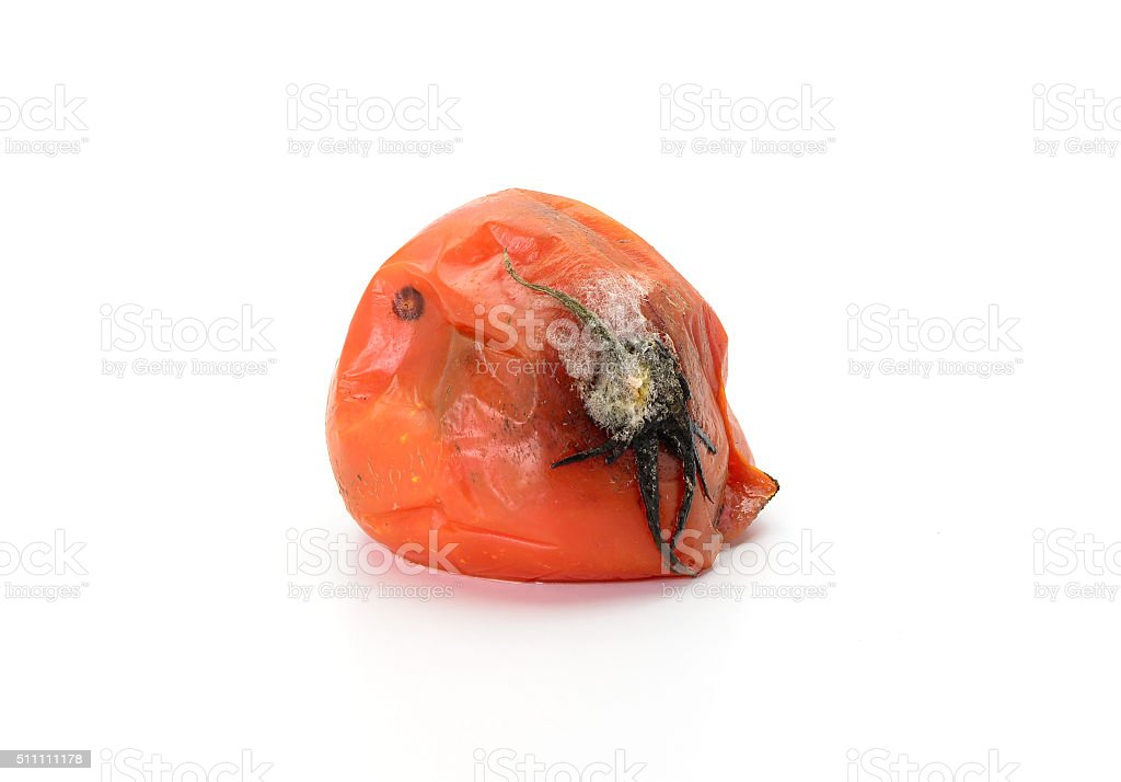 rotten tomato isolated on white background stock photo
