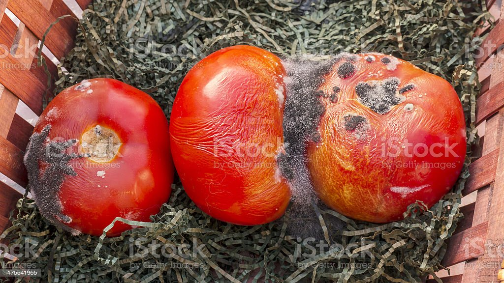 Rotten Tomatoes Close Up stock photo