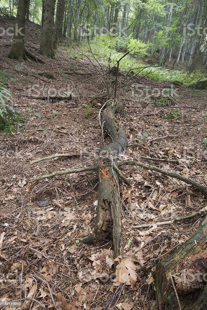 Rotten tree trunck in the forest stock photo