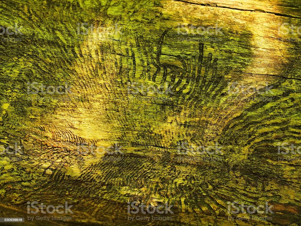 Rotten wood. Fallen tree with marks of attack by insects stock photo