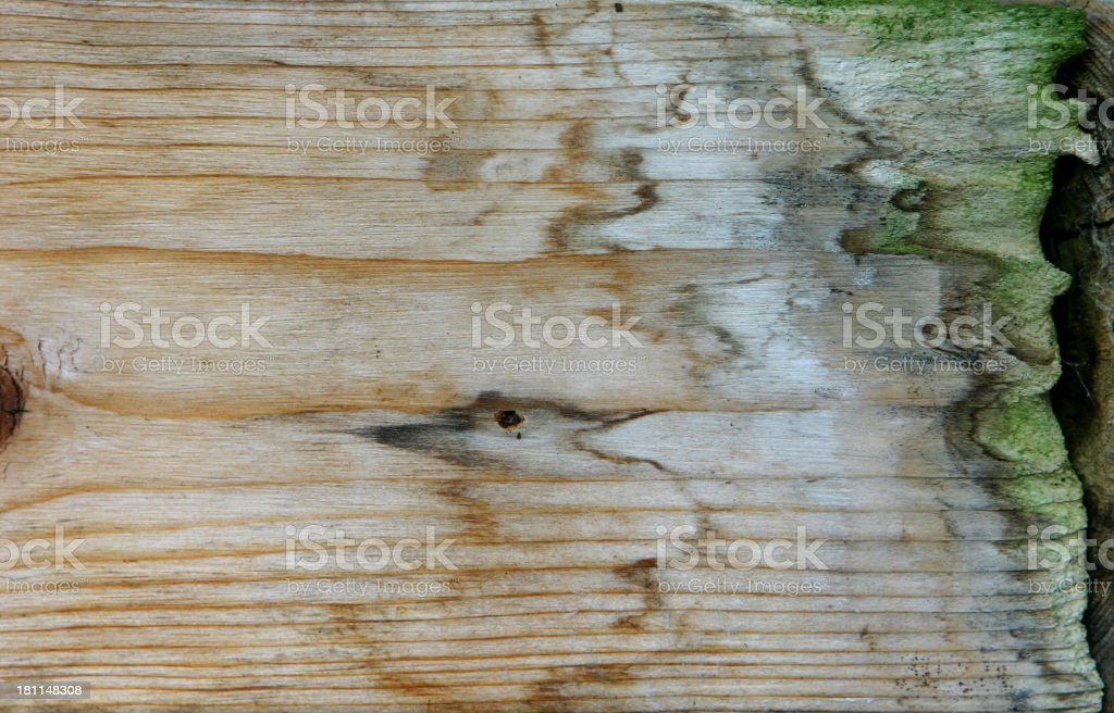 Rotten Wood Layer royalty-free stock photo