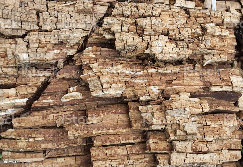 Rotten Wood royalty-free stock photo